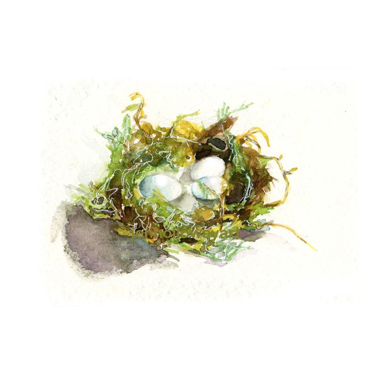 Watercolor Hummingbird Nest, Bird Nest Print, Egg Nest Print by jenhollowayart on Etsy