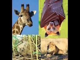 Resultado de imagen para animales viviparos para colorear