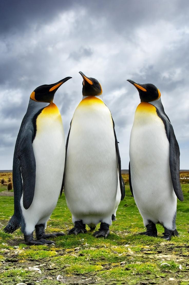 tres-pinguinos-charlando-en-los-paisajes-de-la-patagonia