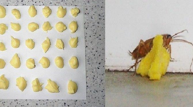 Como se livrar das baratas para sempre - testado e aprovado!   Cura pela Natureza