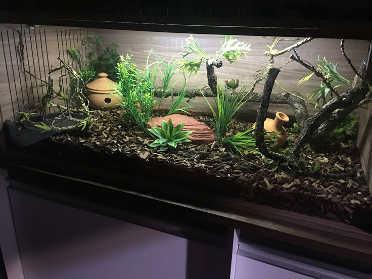 Vivarium Corn Snake & Best 50+ Reptilish Pets images on Pinterest | Animales Amphibians ...