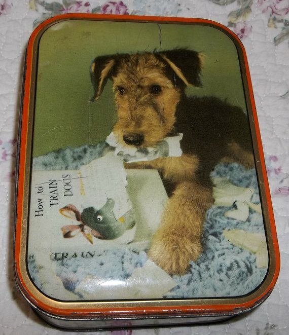 17 Best Images About Pins For Pets On Pinterest: 17 Best Images About Welshies (Welsh Terriers) On