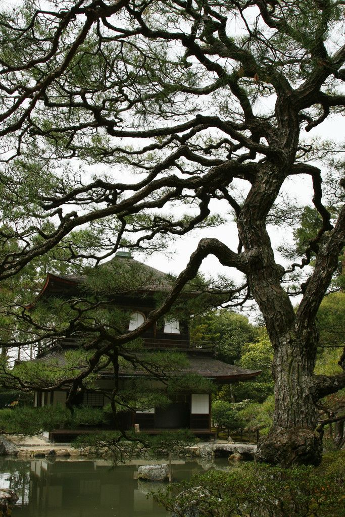 Beautiful Japanese House 178 best japanese gardens images on pinterest | japanese gardens
