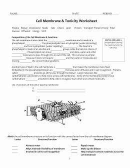 Cell Membrane Images Worksheet Answers Lovely Cell ...