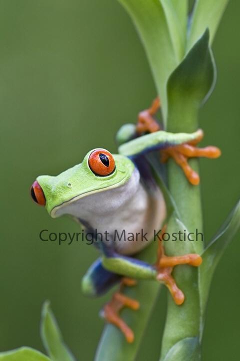 26 best Classificar animais images on Pinterest | Biowissenschaft ...