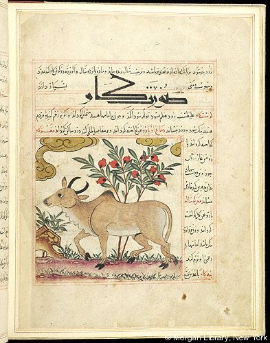 Bestiary, Bull in left profile; flowering plant. - The Morgan Library & Museum