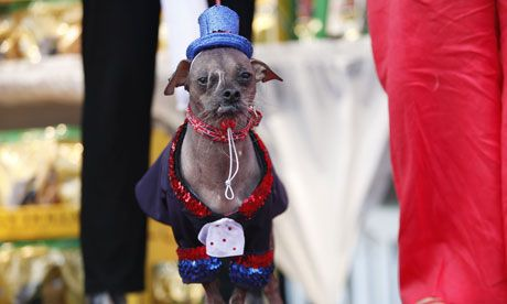 A Chinese crested, named Mugly during the 2012 World's Ugliest Dog contest.