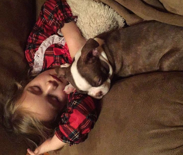 18 best dog days of summer images on pinterest dog days main mckenley and willie snoozing on the couch get stuck into the smile philosophy solutioingenieria Images