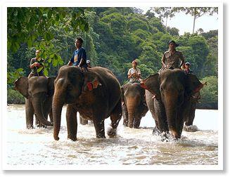 Dichte jungle op Sumatra, een bouwsteen van Indonesie online tangkahan