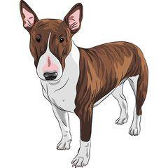vector smiling cartoon Bull Terrier Dog breed