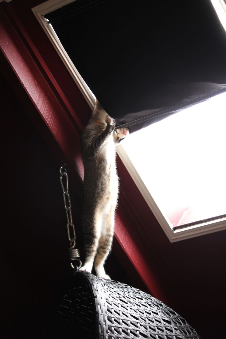 Curiosity killed the cat....get down from there !