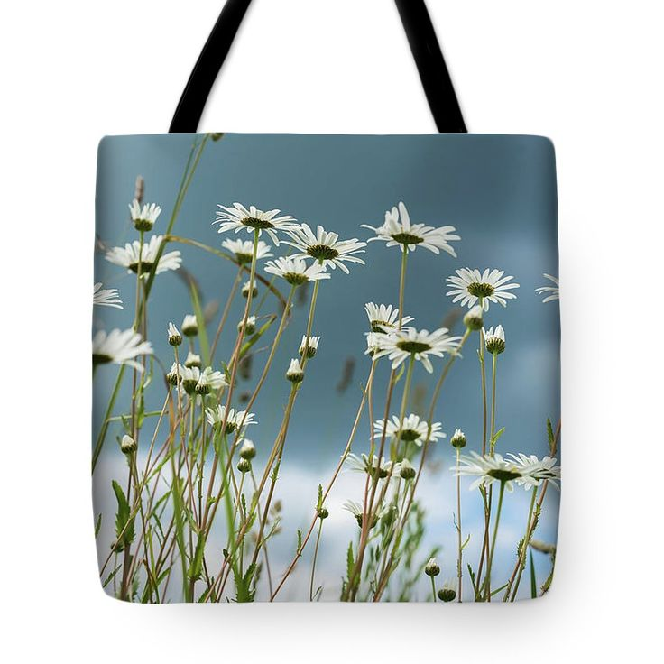 Reach The Sun Tote Bag by Svetlana Iso.    #SvetlanaIso #SvetlanaIsoFineArtPhotography #Photography #ArtForHome #InteriorDesign #FineArtPrints #Home #Gift #Color #Daisies #Chamomiles #Summer #Tote #Bags