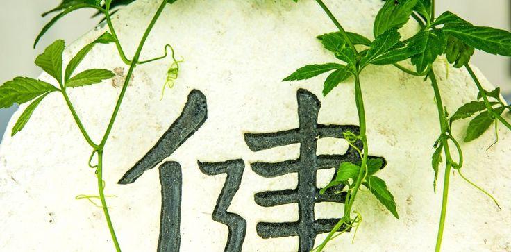 Benefits of Gynostemma Pentaphyllum