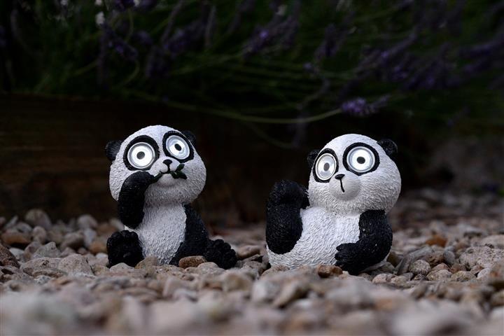 Diamo il Benvenuto a questa simpaticissima coppia di #Panda nella nostra già grande famiglia di animali a Energia Solare! Di giorno si caricano, di notte accendono gli occhi.