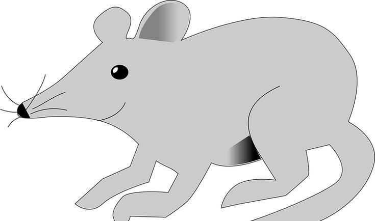 Ahuyentar a las ratas con menta plantas pinterest for Ahuyentar ratas jardin