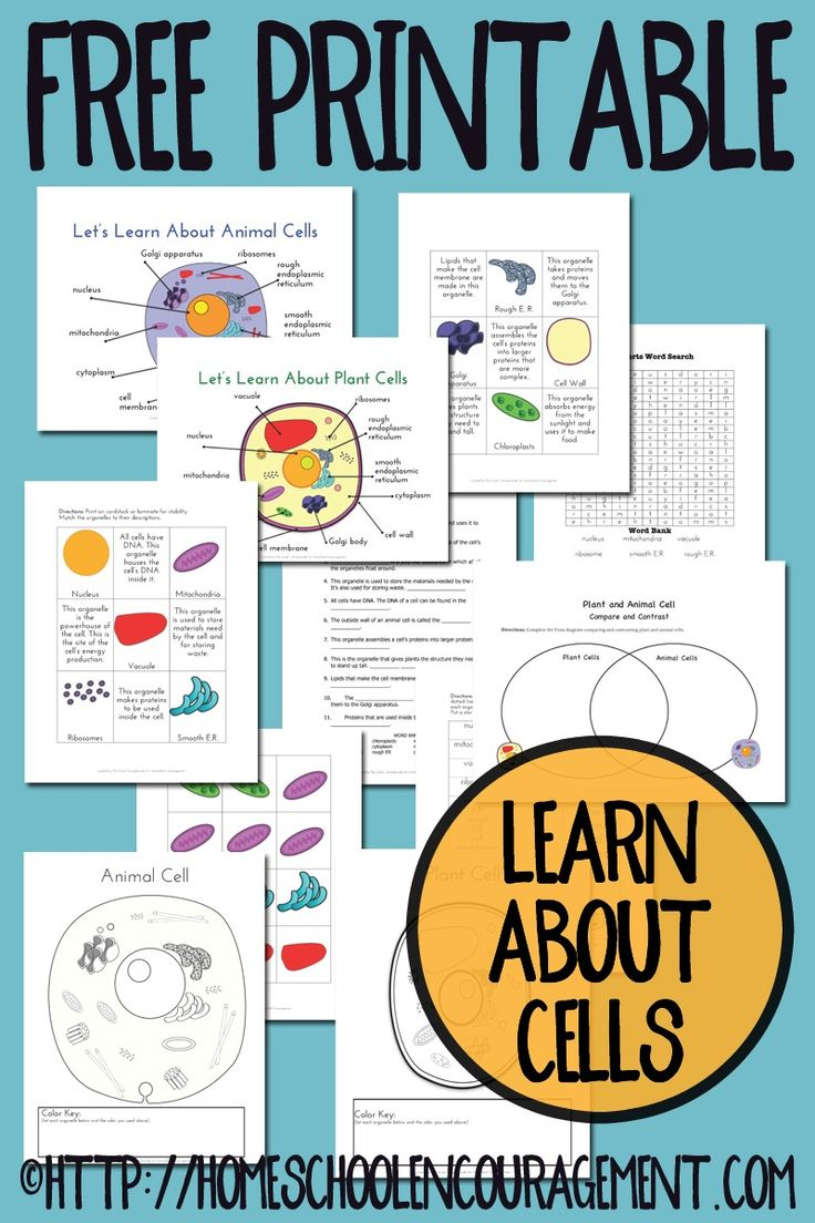 Cells unit study resource. Free Printable - Learn about plant and animal cells - label, color, and more.