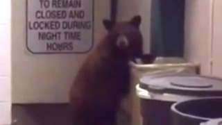 An unusual police run-in took place in Auburn, California when an officer stumbled upon a baby bear checking out the station's garbage situation. The cop took video of the animal walking over to the garbage cans and looking inside while he ordered him not to knock over the bins. The bear seems to almost be listening to the official as he stands on one of the cans, as it teeters on its side. The Placer County Sheriff's Office posted the video to Facebook but didn't end up booking the cub.