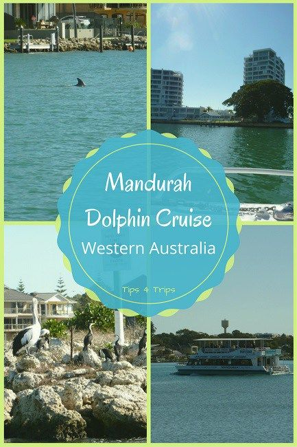 A day trip an hour from Perth on a Mandurah Dolphin Cruise, great for all memebers of the family. https://traveltips4trip.com/perth-day-trip-mandurah-dolphin-cruise/