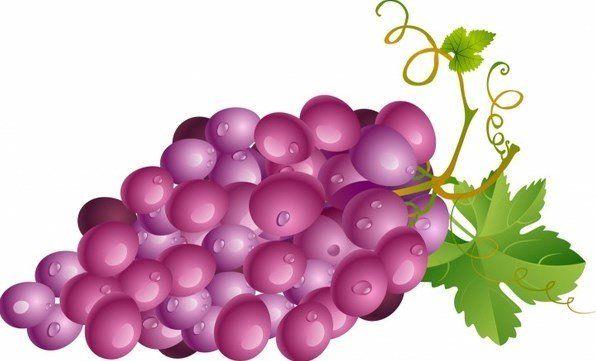 تفسير رؤية العنب في المنام للمتزوجة لكبار العلماء موقع مصري Grapes Leaves Vector Vector Free