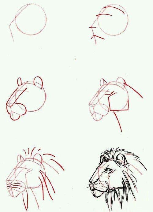 Image via We Heart It #diy #draw #howto #illustration #lion #sketch #tutorial