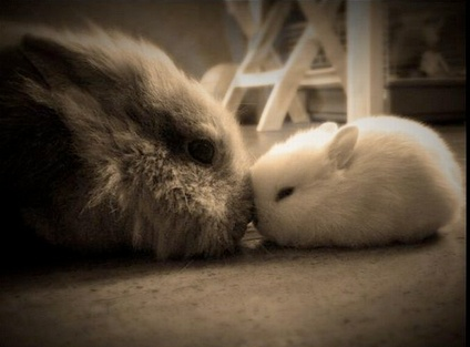 Momma and baby bunny