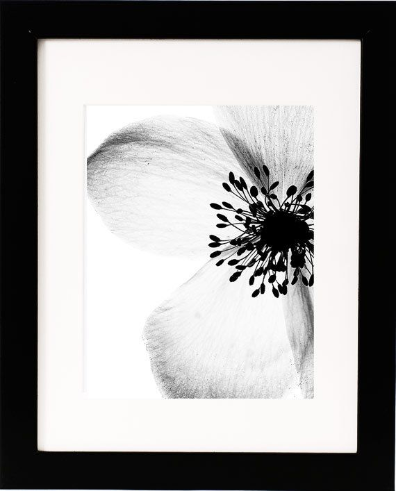Gritty anemone 8 x 10 contemporary botanical print black white photography