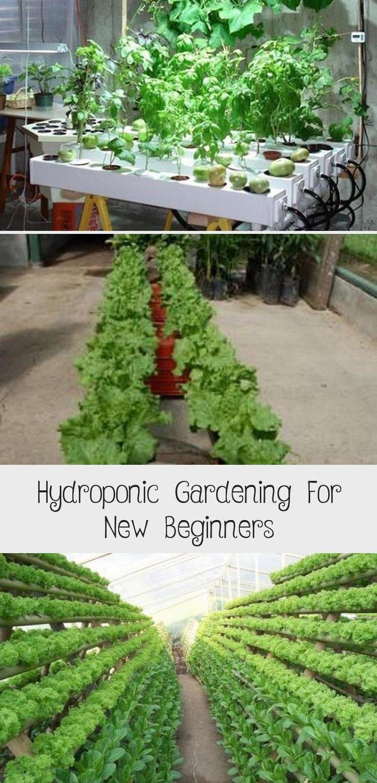 Hydroponic Gardening For New Beginners Sebze bahçesi