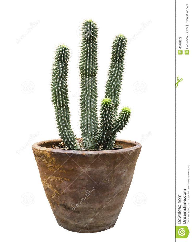 bloempotje cactus - Google Search