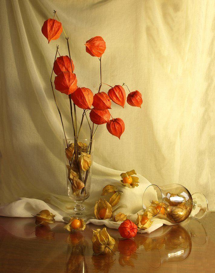 было ваза с физалисами картинки пара гладит
