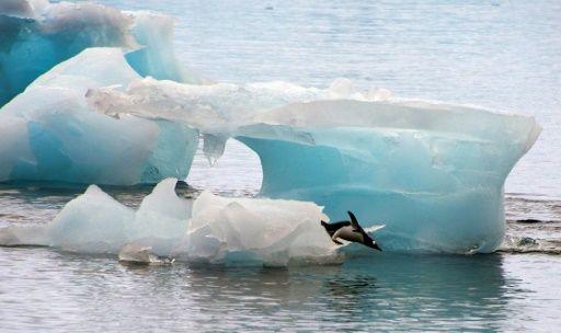 Unos 150.000 pingüinos murieron como consecuencia de un masivo iceberg que se desplazó hasta su colonia en la Antártida, obligándoles a emprender un exilio en busca de comida, según un nuevo estudio científico.