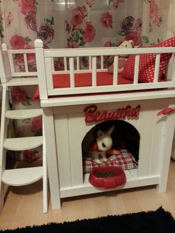 The cutest bunny ever! In his new house! Charlierabbit!