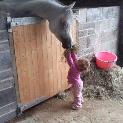 so cute: Little Girls, Baby Feeding, Arabian Hors, Bon Appetit, Arabianhor, Cowgirl, Help Hands, Kid, Animal