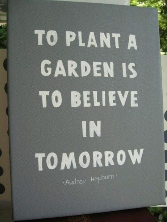 To plant a garden is to believe in tomorrow.  Vandaar al die hortensia's in de tuin ;-)
