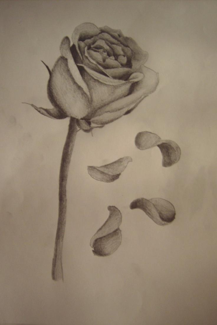 petals of a flower falling off 的圖片結果