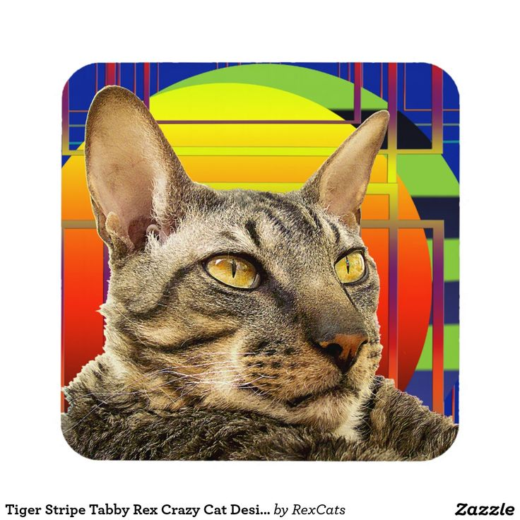Tiger Stripe Tabby Rex Crazy Cat Design Beverage Coaster