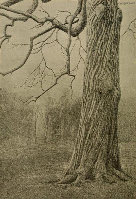 illus 160 trunk of spanish chestnut drawing treestree