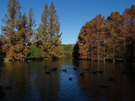 Parco Bucci