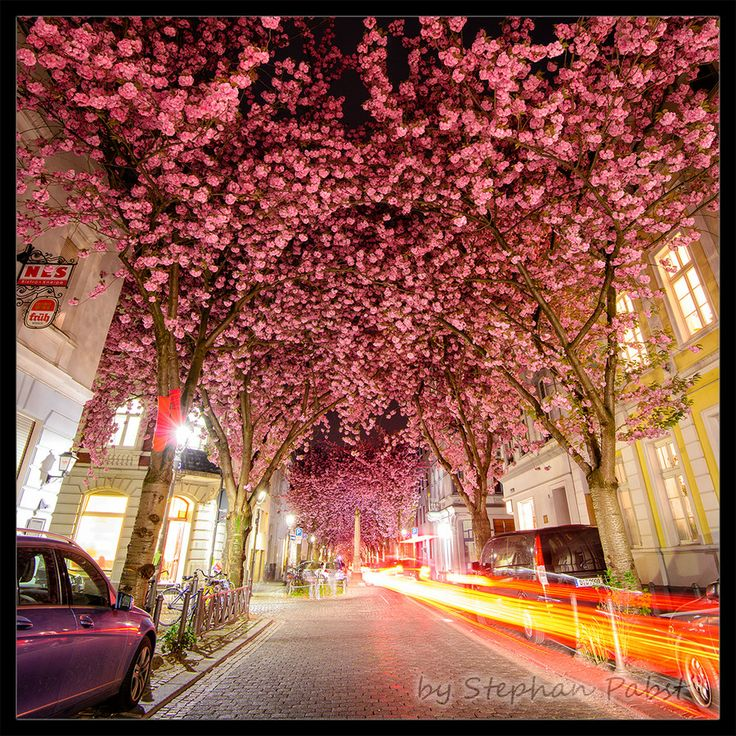 Photo Cherry Blossom Avenue by Stephan Pabst on 500px