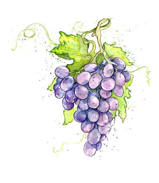 Рисунки винограда акварелью