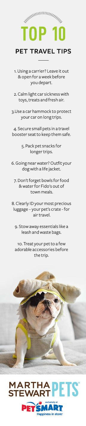 The top ten pet travel tips from Martha Stewart Pets #marthastewartpets #petsmart