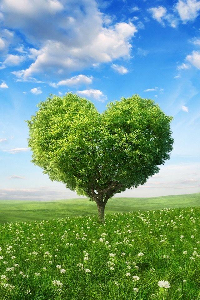 Pin By Jameika Chantel On Beautiful Trees Tree Wallpaper Backgrounds Heart Tree Tree Wallpaper Iphone
