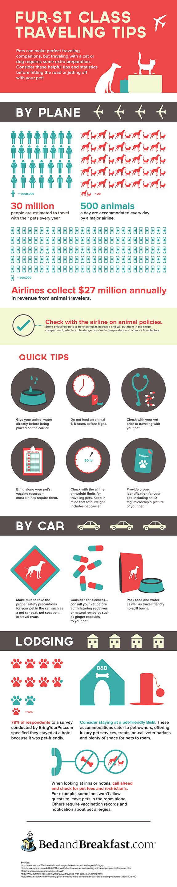 Travel with Your Pet: Tips to Hit the Road with Your Furry Companion - Tipsographic