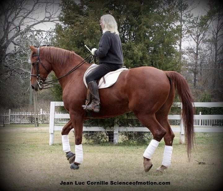 54 best Horse DIY images on Pinterest Equestrian, Horses and - free horse bill of sale