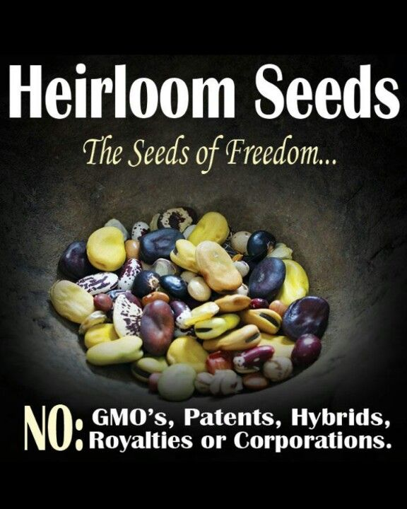 Stock up on and use Heirloom seeds before legislation takes them off the market and it becomes illegal to do so- no #GMO!!!