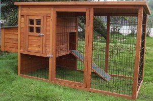 Step by Step Chicken Coop Plans for Beginners