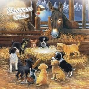 Animal Nativity Christmas Cards