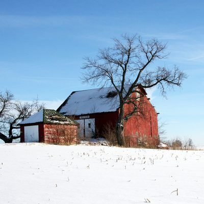 The Milner barn on the east side of the town of Sedalia in Clinton County, Indiana. Photo looks southeast from Indiana State Road 26.