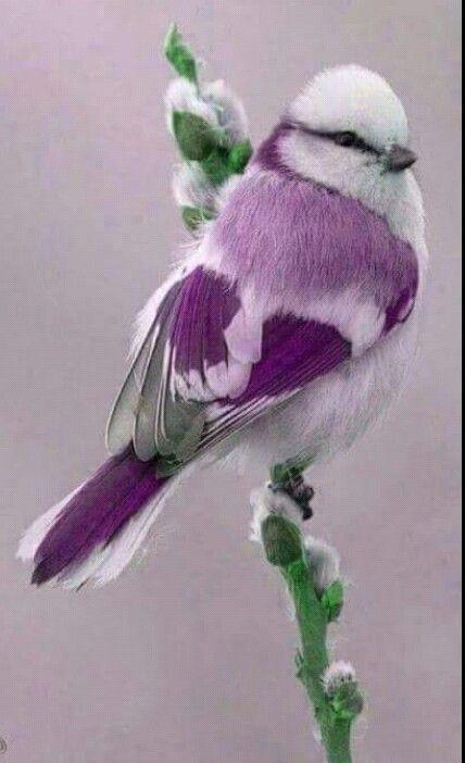 Beauty of Purple