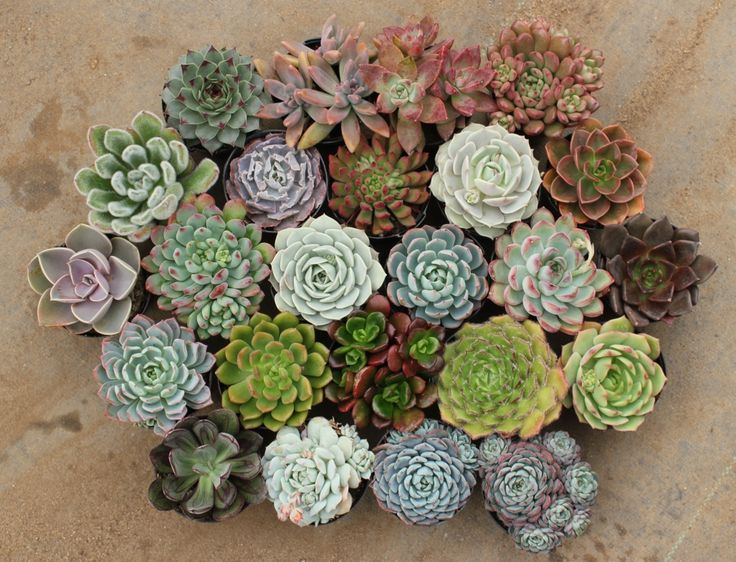 "Another pinner's succulent garden.  Reminds me of  my Grandmother's ""Hens and Chicks"" along the sidewalk many years ago!"
