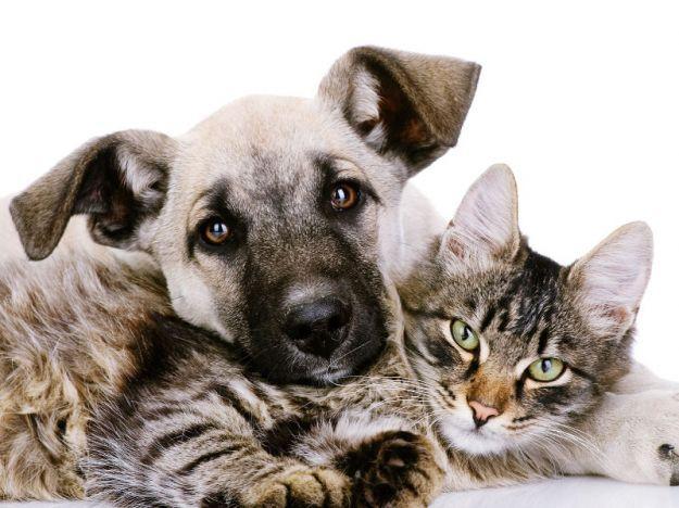 Quali sono gli alimenti velenosi per cani e gatti? Scopriamo solo 10 dei cibi tossici per i nostri amici a quattro zampe.